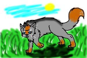 Warrior Cat in Field