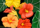 Tropical Colored Flowers