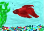 Fred My Bettafish