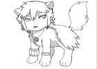 Harmonia puppy