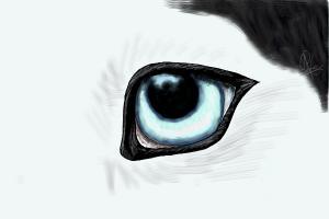 A husky eye
