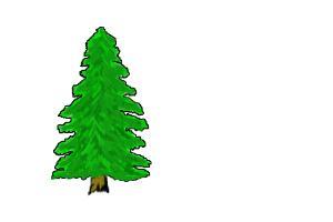 basic pine tree