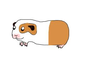 chibi guinea pig