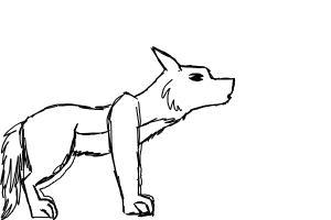 dog/wolf