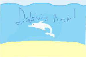 DOLPHINS ROCK!