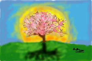 how to draw a Cherry/Blossom tree and sunset