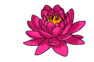 How to draw a pink lotus flower