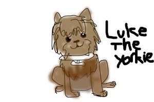 luke the yorkshire terrier