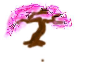 My pink cherry tree
