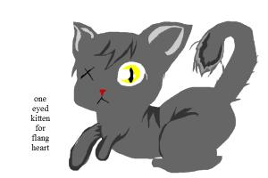 one eyed kitten