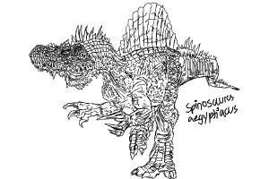 Spino sketching