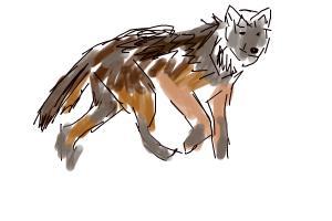 wolf quick sketch