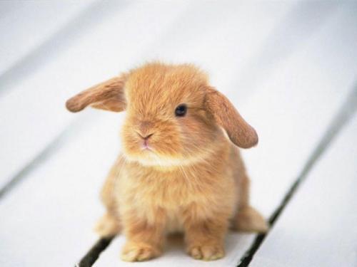 Cute Baby Bunny Drawing Really Really Cute Baby Bunny