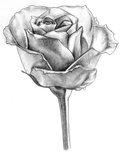 Rose Picture By Aba300 Drawingnow