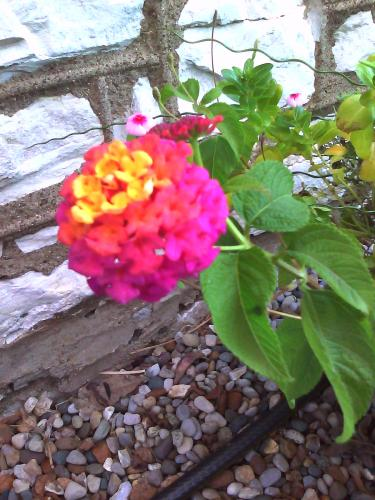 Pwetty flower