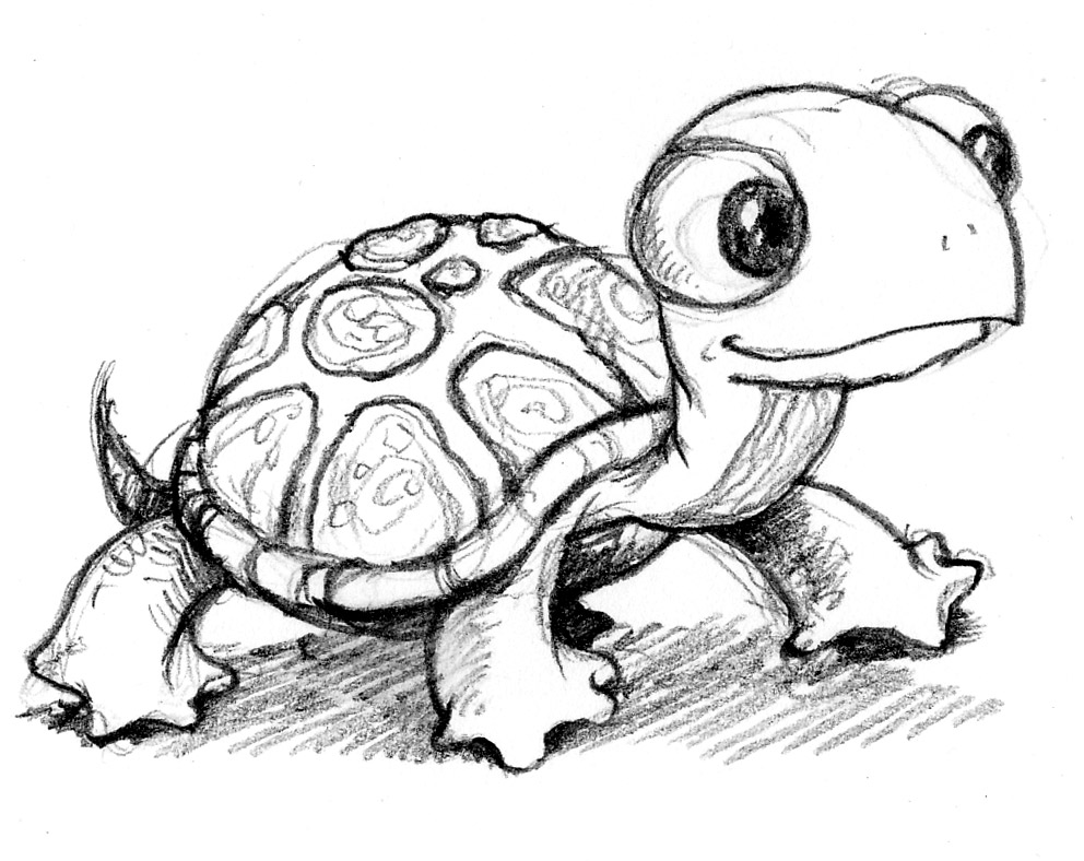 Snapping turtle drawing for kids