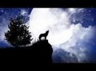 Wolfs of darkness