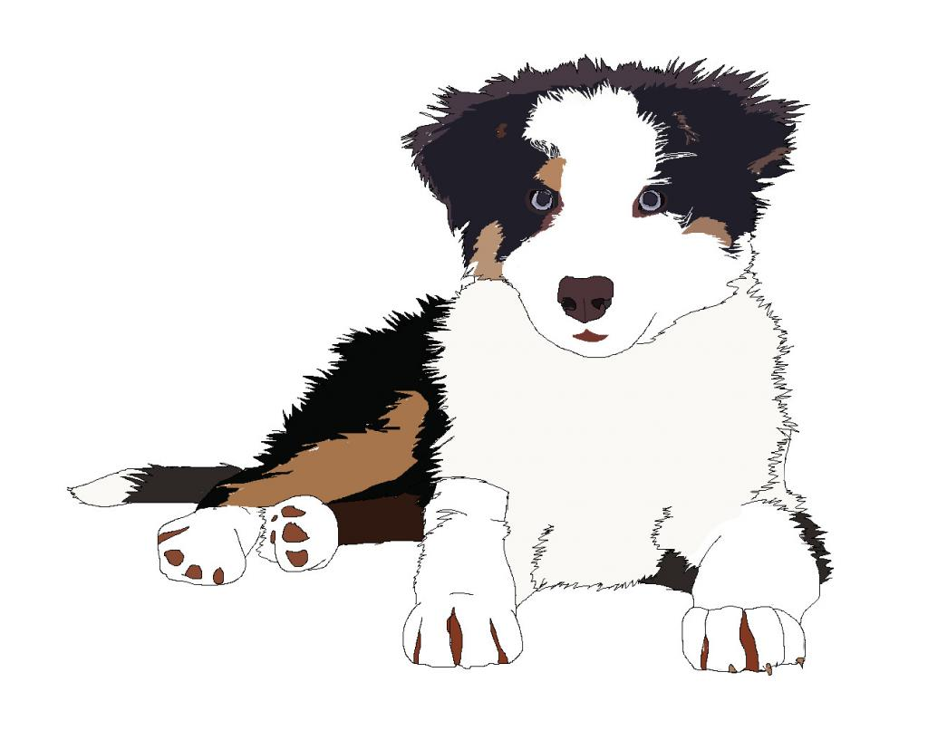 08671 Cute Border Collie Pup White Background Picture By Warriorcatzrulez Drawingnow