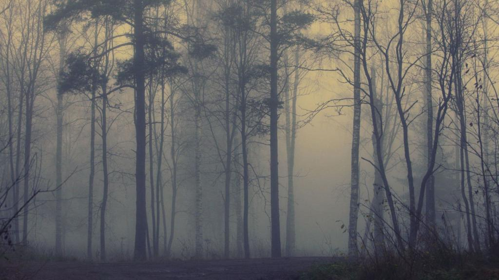Beautiful-Forest-Foggy-Wallpaper-Free-Background-Desktop-Images-457192