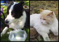Puppycats!!!