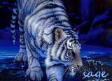 TigerLover593