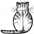 KittyDKat