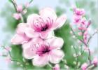 How to Draw Peach Blossom