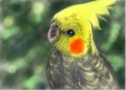 How to Draw Cockatiel (Re)