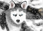 How to Draw a Huskie Dog