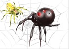 how to draw spiders