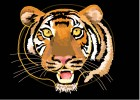 How to Draw a Tiger Close Up