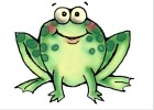 How to Draw a Frog For Kids