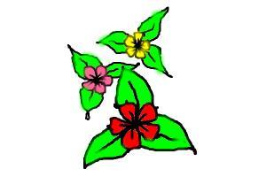 3 Flowers Harshini