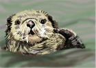 How to Draw sea otters