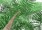 How to Draw a Palm Tree Close Up