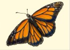 How to Draw a Butterfly Design