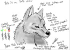 How to Draw a Wolf Jess's Way