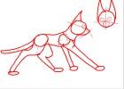 How to draw cat anatomy part one