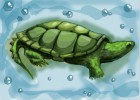 How to draw a Snapping Turtle