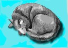 How to Draw a Siberian Husky Curled Up Sleeping