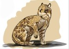 How to Draw an Ocelot Cat