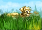 How to draw a Dog playing on the grass