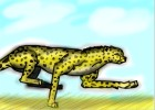 The Running Cheetah