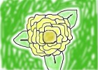 My Drawing Of a Flower.