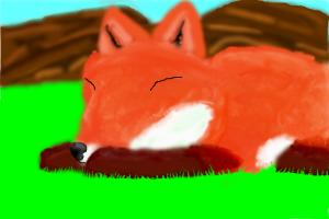 A sleeping Red Fox