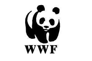 How To Draw Wwf Panda