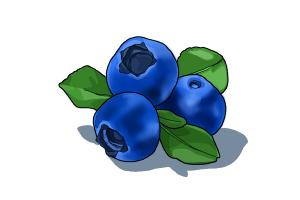 How to Draw a Blueberry