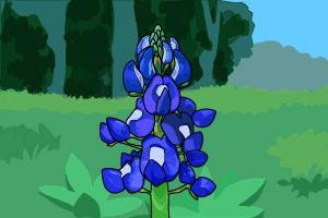 How to Draw a Bluebonnet