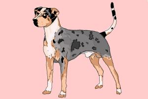 How to draw a Catahoula Leopard Dog