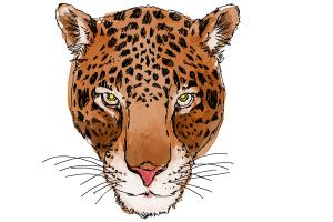 How to draw a Cheetah face